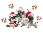 Puggle Christmas
