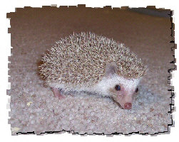 Grayson the Hedgehog