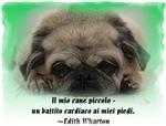 Animale-Amanti italiani
