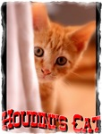 Famous Cats - Houdini's Cat