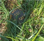 Hidden Turtle
