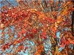 Leaving Fall