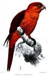 Beautiful Scarlet Bird