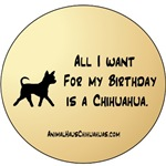 All I want for my B-day is a Chihuahua