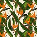Bird of Paradise Tropical Floral