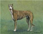 Brindle Greyhound Standing