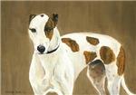 Brindle Spot Greyhound
