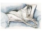 Sleeping greyhound