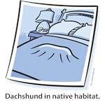 Dachshund Native Habitat