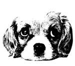 (kids) Sad Puppy Face