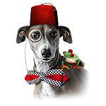 An Italian Greyhound Adventure