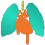 HEART LUNGS