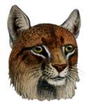 Bobcat T-Shirts