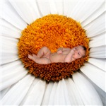 Sweet Daisy Flower Baby Gifts