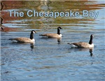 Chesapeake Bay Calendars