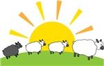 Sun and Sheep