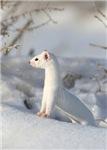 Winters Coat