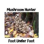 Mushroom Hunter, Hen