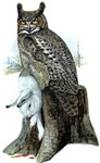 Killer Owl!