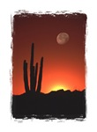 Cactus Moon Products