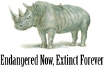 endangered rhinoceros