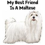My Best Friend Is A Maltese