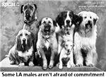 Some LA Males. . .