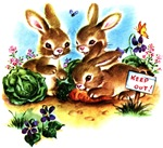 Cute Bunny Rabbits Bunnies