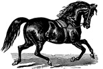 Shiny Black Stallion Horse