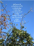 Serenity Prayer Apple Tree