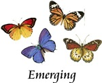 Emerging Butterflies ~