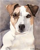 Jack Russell Terrier Stuff!