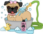 Cute Pugs Bath Time