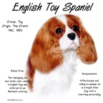 English Toy Spaniel (blenheim)