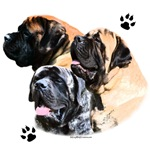Mastiff Trio