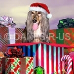 Afghan Hound Christmas Surprise