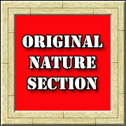 Original Nature Section