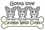 Three Blue Merle Cardigan Welsh Corgis