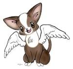 Precious Chihuahua Angel