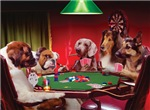 Poker Dogs - Several dog breeds sitting around a table playing stud poker.