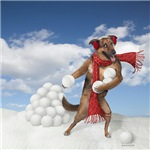 Doggie Snowball Fight