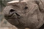 Rhino 8856