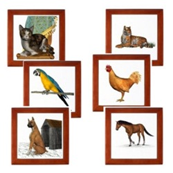 Paw Prints - Animal Designs