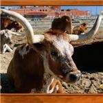 Longhorn #5