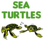 Sea Turtle Designs