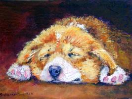 Corgi Drowsy Puppy