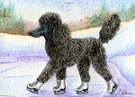 Black poodle takes to the ice