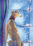 Greyhound watching snow fall