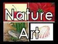 Still Life / Nature