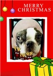 MERRY CHRISTMAS BOSTON TERRIER LOOK